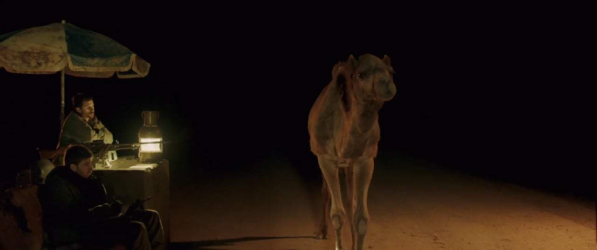 Hump it for the camel!
